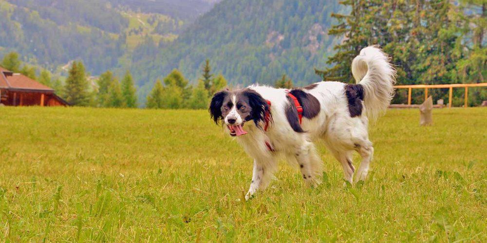 Urlaub mit Hund im Val di Fiemme